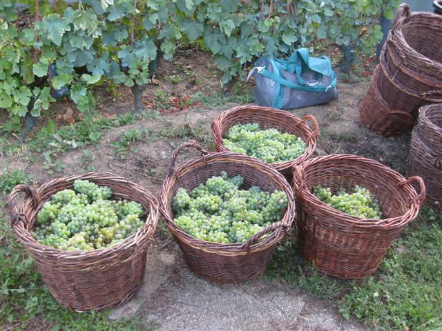 vendanges-009-small.jpg